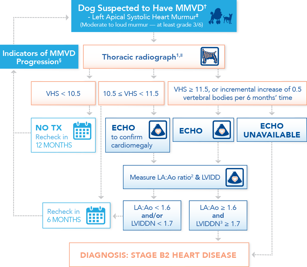 Algorithm for diagnosing preclinical myxomatous mitral valve disease